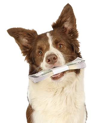 dog-with-money2