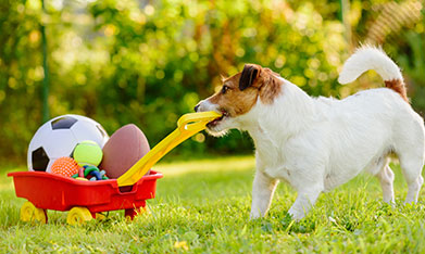 Pet Wellness Care in Lewisville: Dog Pulling Small Toy Wagon
