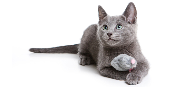 Contact Us: Cat Playing With Toy Mouse