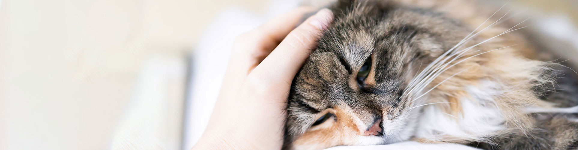Pet Emergency Care in Lewisville: Owner Petting Cat