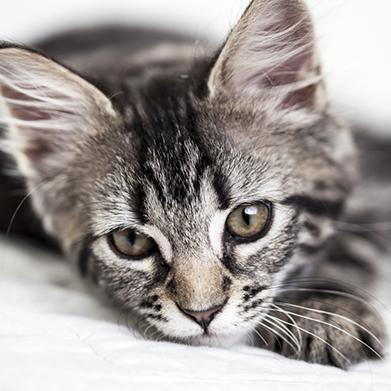 Pet Boarding in Lewisville: Kitten Laying On Blanket